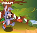 Rabbit costumes
