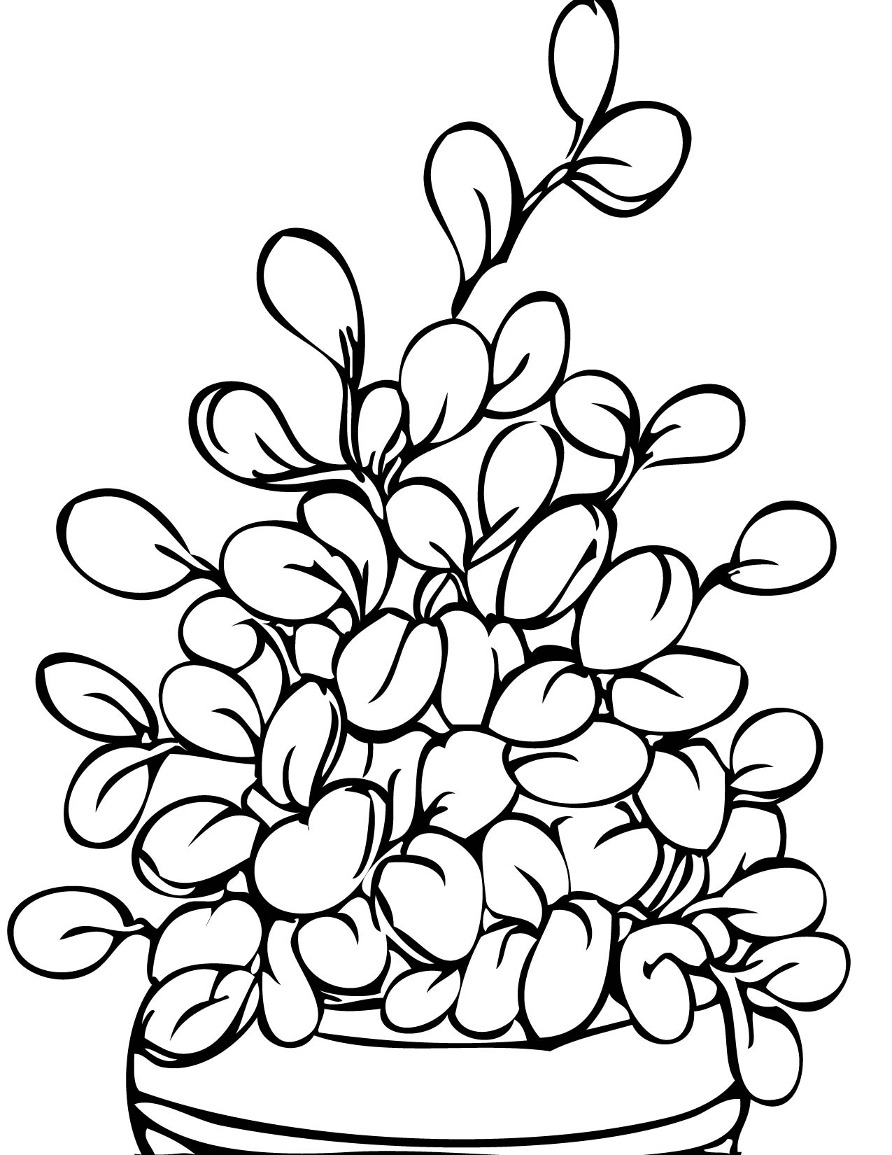 Jade Plant Coloring Page - Handipoints