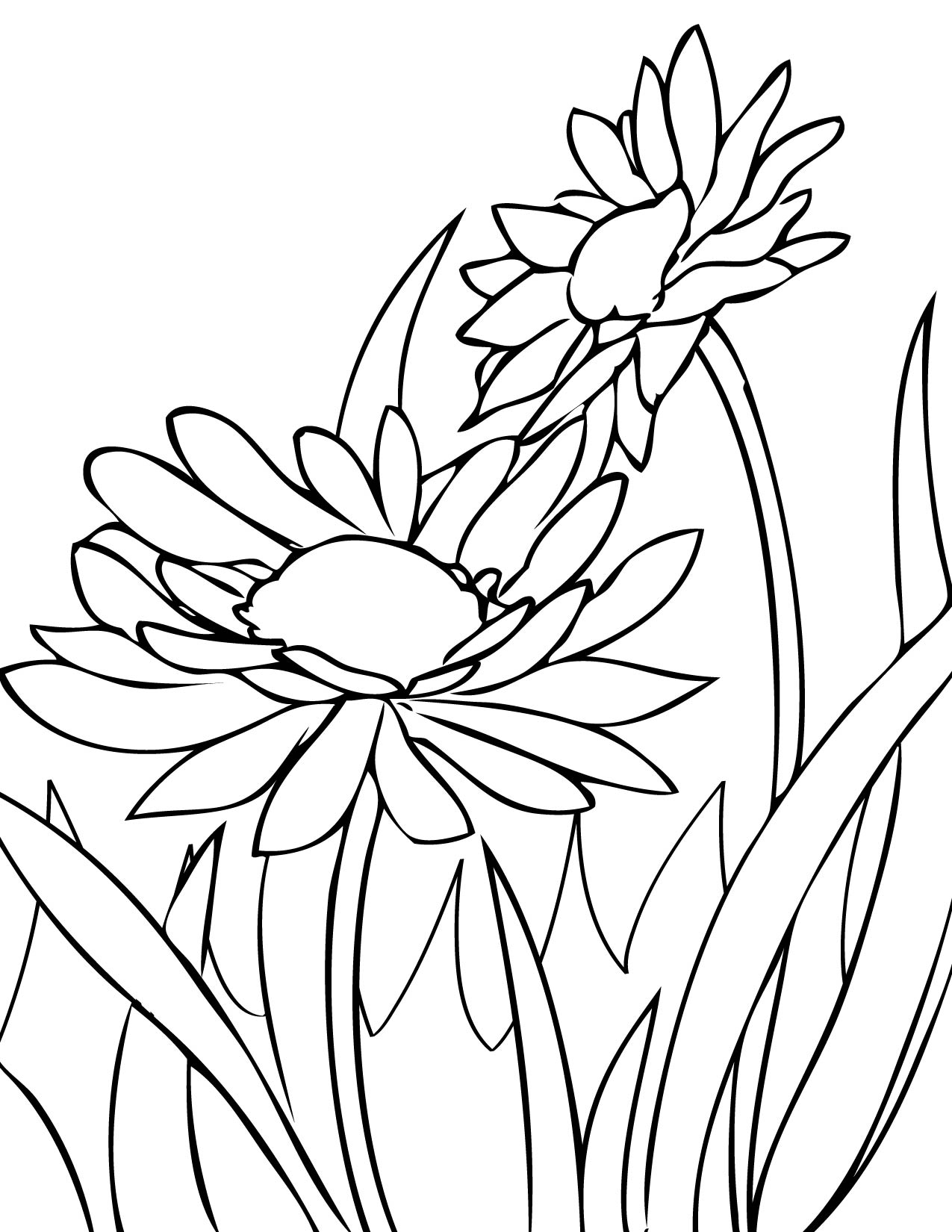 flower coloring pages and facts - photo#27