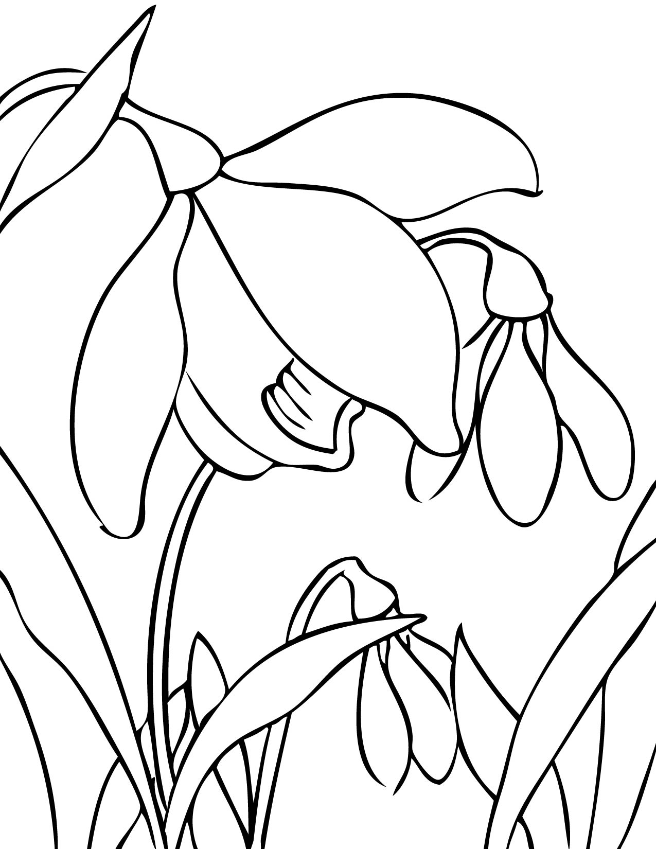 snowdrop coloring page handipoints
