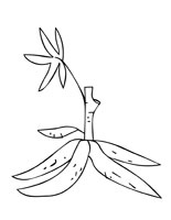 Root Vegetables Coloring Pages - Handipoints