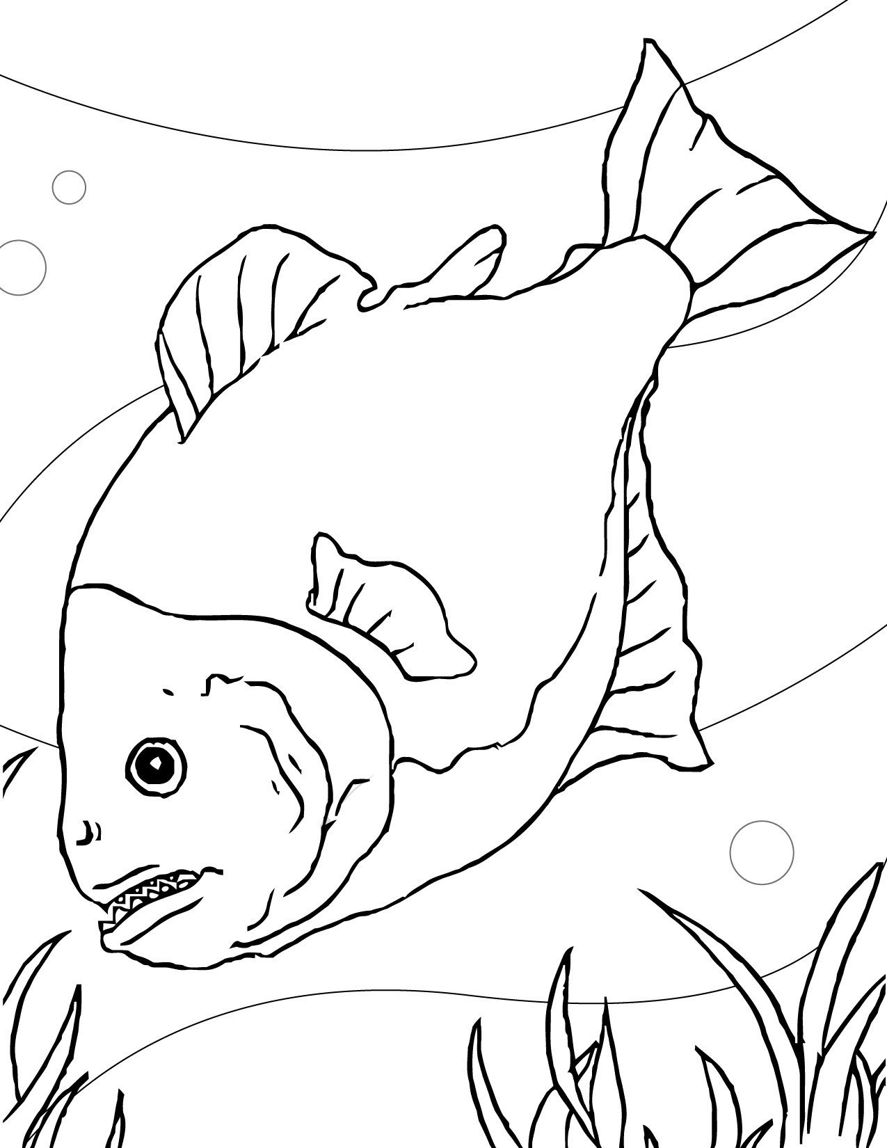 piranha - Aquarium Coloring Pages Printable