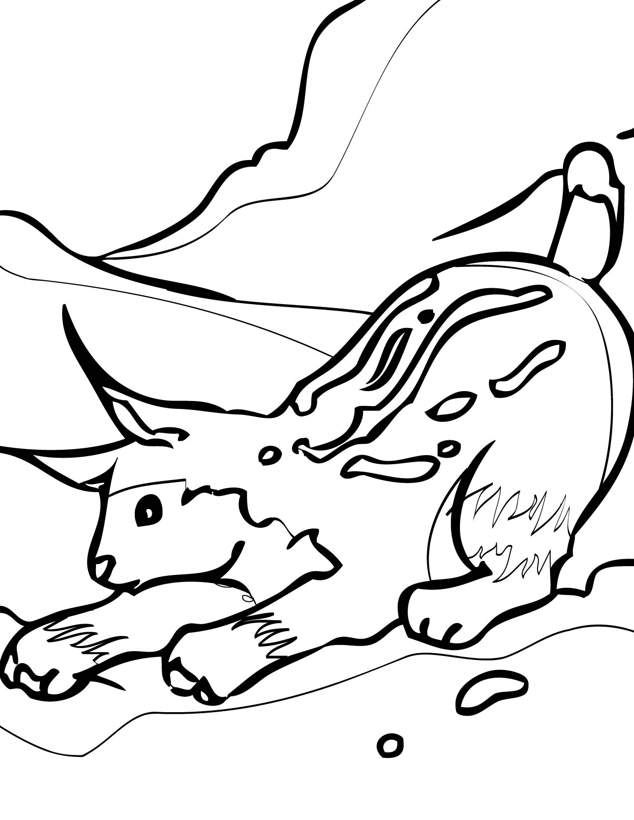 Polar animals coloring pages for kids - Lynx