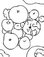 Apple Anemone