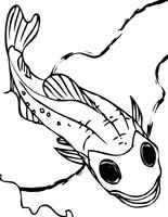 Northern Lampfish