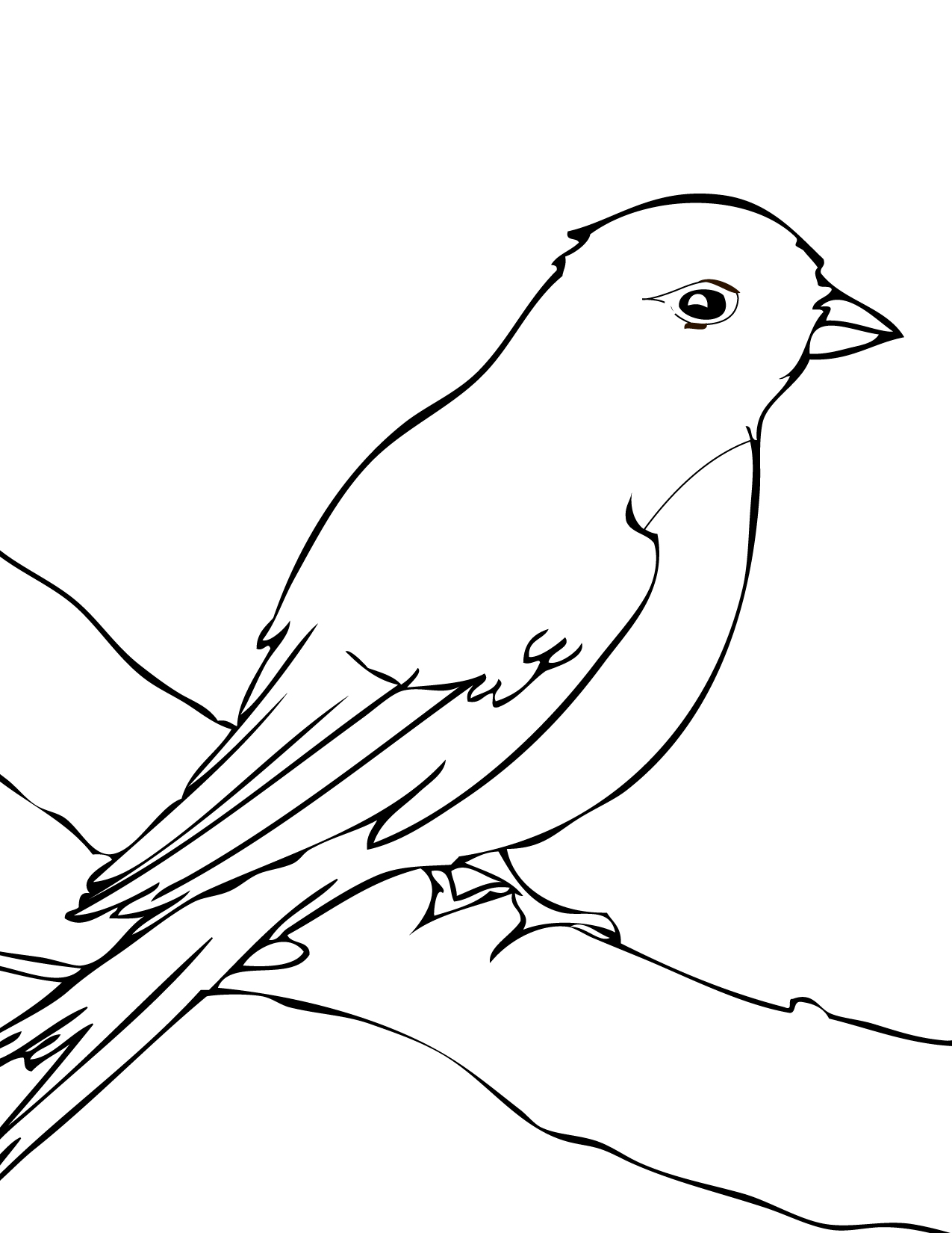 82 Mynah Bird Coloring Page